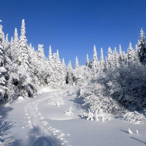Pyasage avec traces de ski nordique