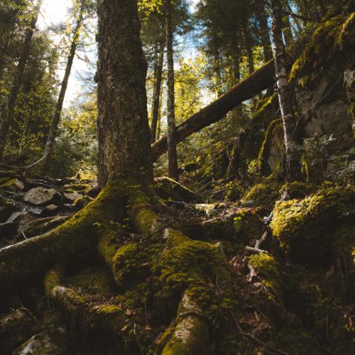 randonnée pédestre, forêt, montagne diable, parc régional